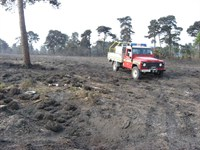 forestFires_pic3.jpg